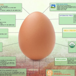 egg_carton_labels